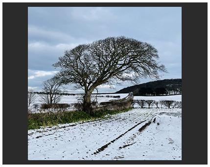 tree in snow landscape