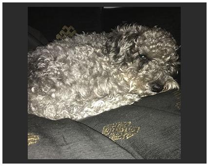 dog sleeping photo