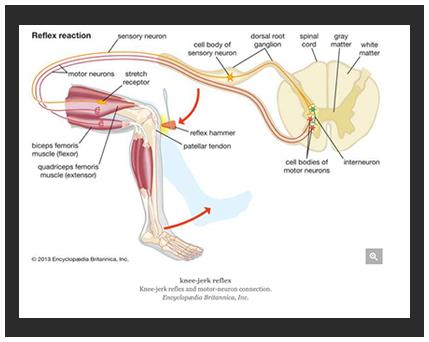 medical diagram photo