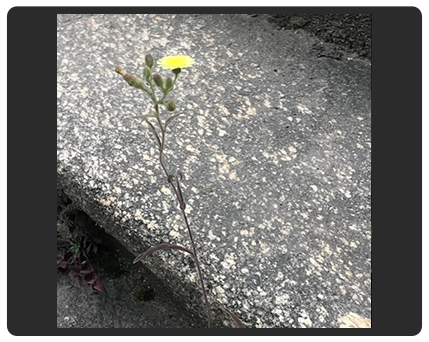 flower and pavement