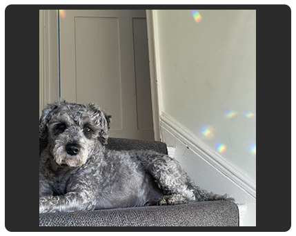 dog on staircase photo